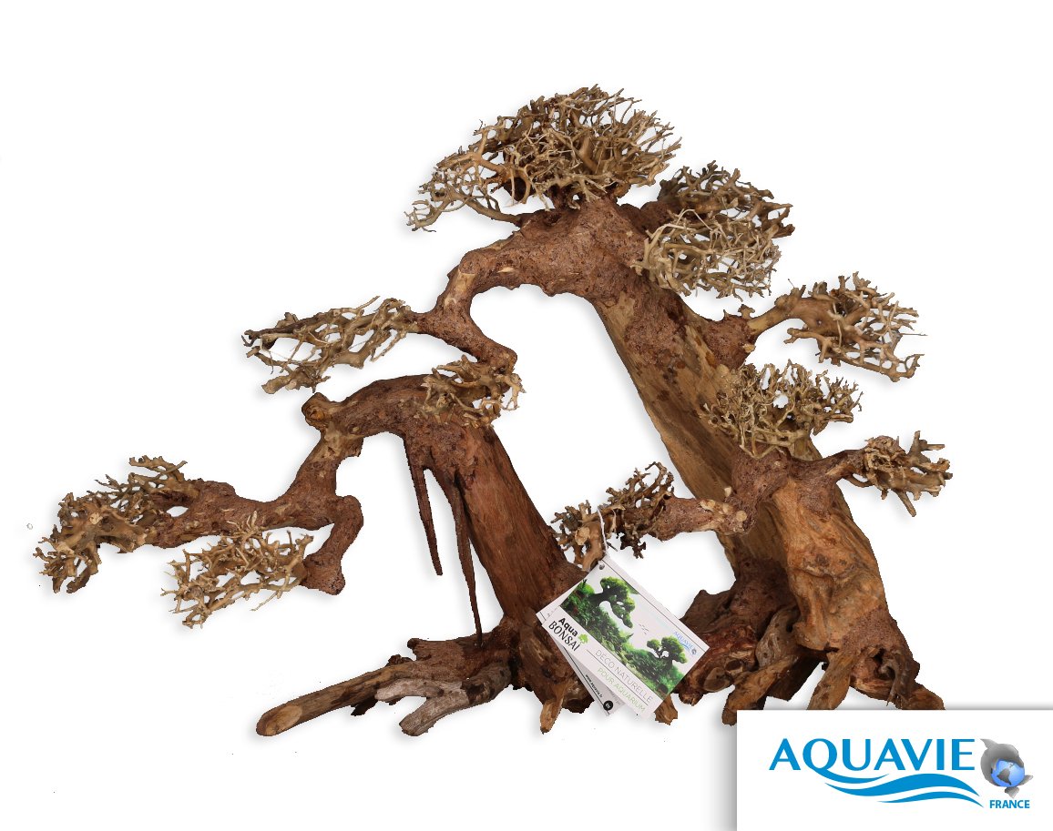 aqua-bonsaï